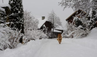 Freude über den Schnee