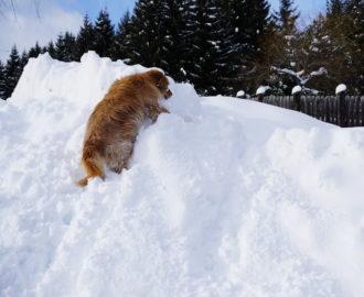 """Loki erklimmt den """"Gipfel"""""""