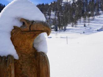 Adler mit Schneehaube