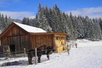 erster Wintergenuß