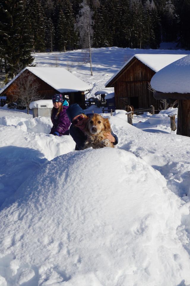 Loki im Schnee