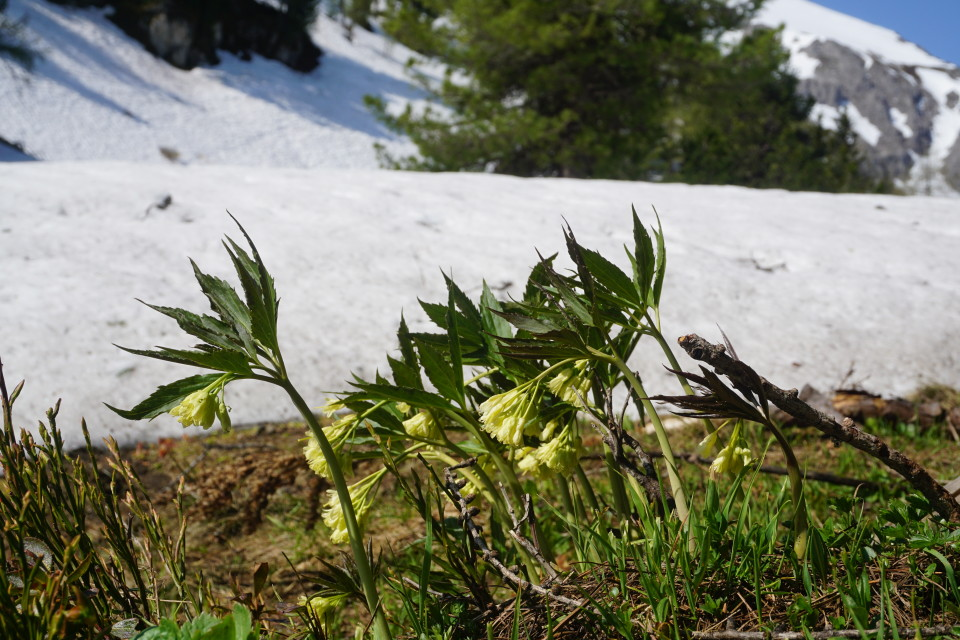Schnee weg - Blume da ;-)