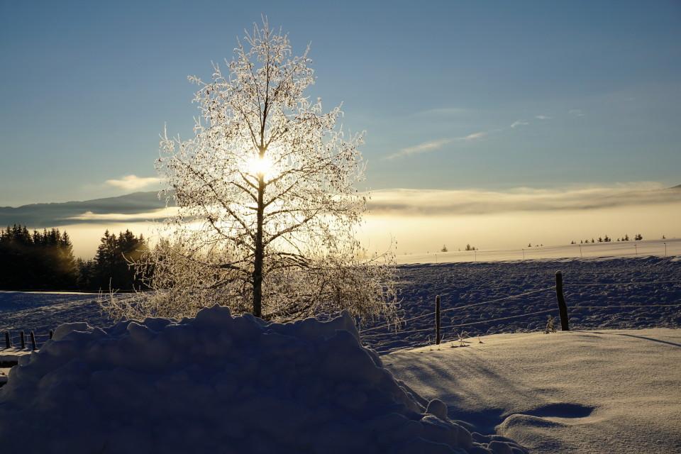 prachtvoller Wintermorgen