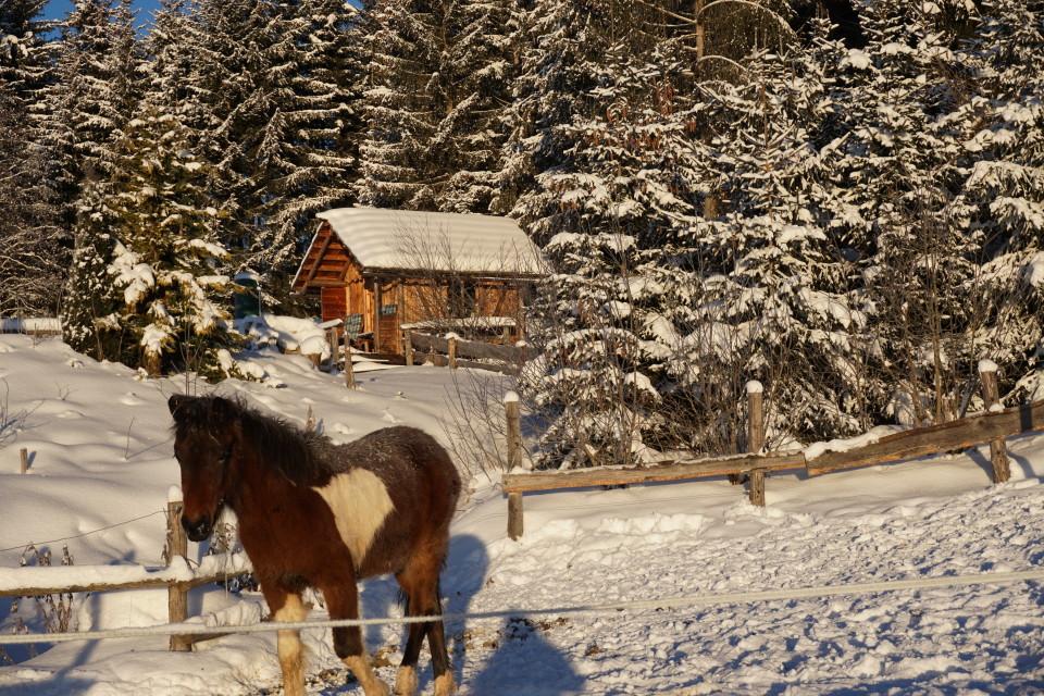 Wintergenuss auch für die Pferde