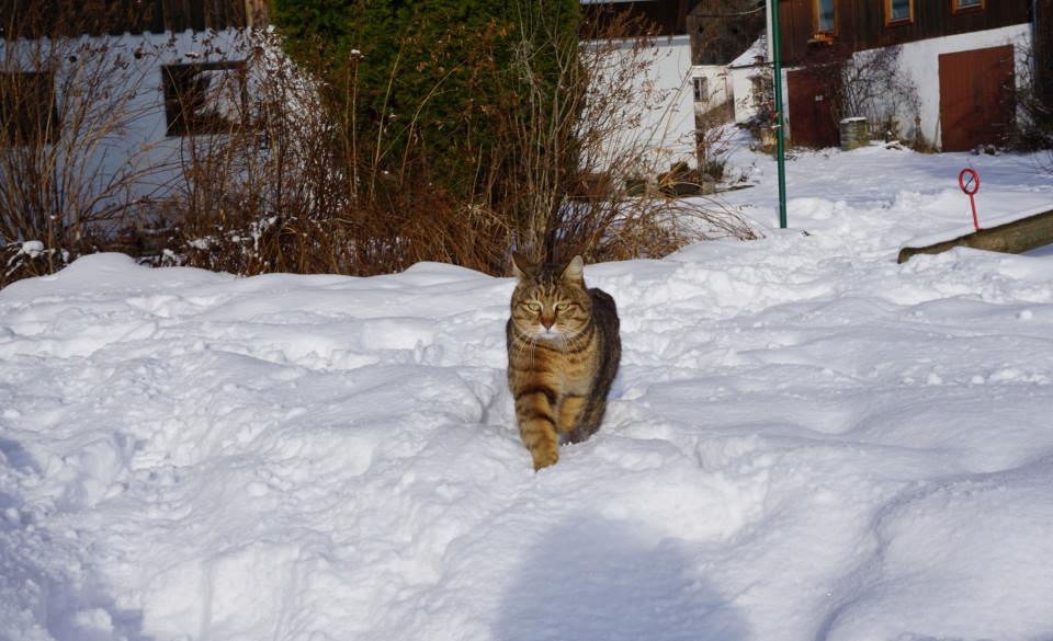 Lux souverän im Schnee
